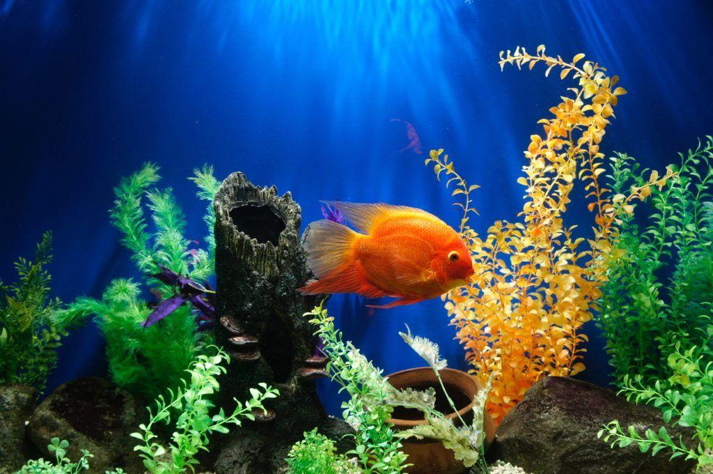 foggy fish tank